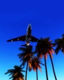 Vliegtuig en Wilde Palmen 6 Stock Afbeelding