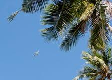 Vliegtuig op de hemel Royalty-vrije Stock Afbeeldingen