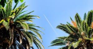 Vliegtuig tussen palmen stock afbeelding