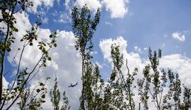Vliegtuigen, witte wolken, blauwe hemel Stock Fotografie