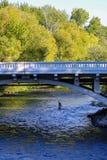 Vliegvisser op Boise River in Boise van de binnenstad, Idaho stock fotografie