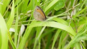 Vlinder - één van mooi en leuk schepsel in de wereld royalty-vrije stock foto's