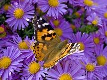Vlinder. Stock Foto