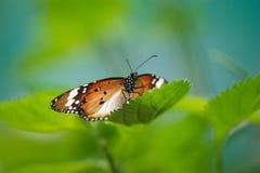 Vlinder royalty-vrije stock fotografie