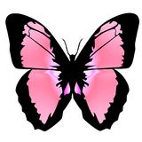 Vlinder 12 stock illustratie