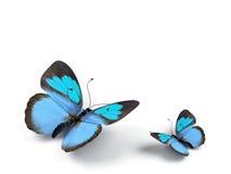 Vlinder. Royalty-vrije Stock Foto