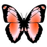 Vlinder 14 stock illustratie
