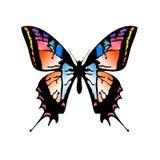 Vlinder 3 stock illustratie