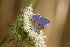 Vlinder #3 Royalty-vrije Stock Foto