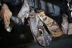 Vlinder; Royalty-vrije Stock Afbeeldingen