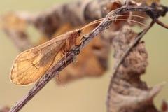 Vlinder. Stock Fotografie