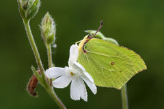Vlinder. Stock Foto's