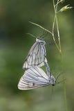 Vlinder. Royalty-vrije Stock Fotografie