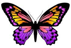 Vlinder 6 vector illustratie