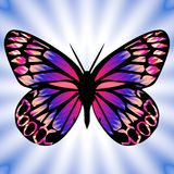 Vlinder 8 royalty-vrije illustratie