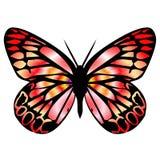 Vlinder 9 royalty-vrije illustratie