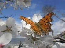 Vlinder in aard royalty-vrije stock fotografie