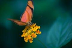 vlinder alleen die sinaasappel en zwarte in kleur in een tuin wordt gesteld royalty-vrije stock afbeeldingen