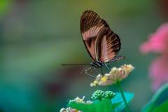 vlinder alleen rode wit en zwarte gesteld in kleur in de zomer in profiel stock afbeelding