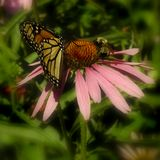 Vlinder & Bij op Roze Bloem Royalty-vrije Stock Afbeeldingen