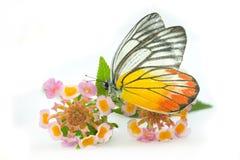 Vlinder & Mooie bloem stock foto