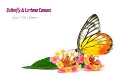 Vlinder & Mooie flowe stock afbeelding