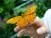 Vlinder, Australië Stock Foto's