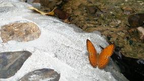 Vlinder bij aantrekkelijkheid van Thailand Stock Foto