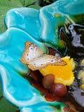 Vlinder bij de dierentuin stock fotografie