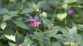 Vlinder bij de seizoengebonden bloei wordt neergestreken die Stock Fotografie