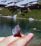 Vlinder bij de vinger Royalty-vrije Stock Afbeeldingen
