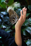 Vlinder bij vrouwelijke hand Stock Afbeelding