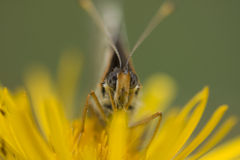 Vlinder in bloem Stock Foto
