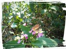 Vlinder in bloem Royalty-vrije Stock Foto's