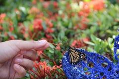 Vlinder, bloem, en hand Stock Fotografie