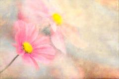 Vlinder-bloemen Royalty-vrije Stock Afbeeldingen