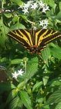 Vlinder in bloemen Royalty-vrije Stock Foto