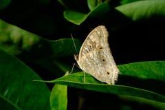 Vlinder in bloemtuin royalty-vrije stock afbeelding