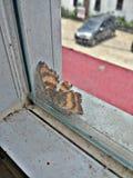 Vlinder buiten de vensters royalty-vrije stock afbeelding