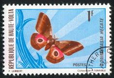 Vlinder stock fotografie