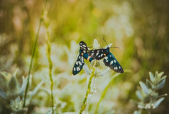 Vlinder, butterfiles, achtergrond Royalty-vrije Stock Afbeelding