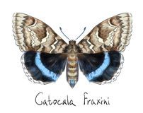 Vlinder Catocala Fraxini. Stock Afbeeldingen