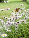 Vlinder in de bloemen royalty-vrije stock foto's