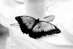 Vlinder in de theepauze, zwarte witte versie Royalty-vrije Stock Afbeelding