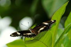 Vlinder in de tuin royalty-vrije stock afbeelding