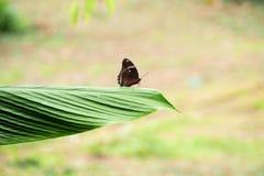 Vlinder in de tuin Stock Foto