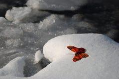Vlinder in de winter Stock Afbeelding