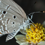 Vlinder dichte omhooggaand Royalty-vrije Stock Foto's