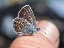 Vlinder dichte omhooggaand Royalty-vrije Stock Fotografie