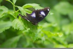 Vlinder die op blad neerstrijken Stock Foto